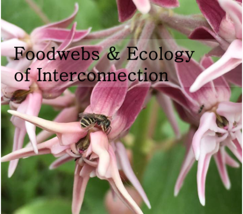 foodwebs.png
