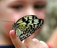 child-with-butterfly
