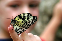 child-with-butterfly.jpg